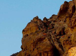 کوئی چار سو میٹر دور ان مارخوروں کا جھنڈ بڑی تیزی سے ان چٹیل پہاڑوں پر چڑھتا چلا جا رہا تھا۔