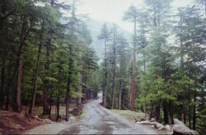 Kalam-Valley-Swat-Pakistan-a-forest