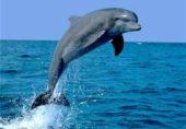 اندھی ڈولفن سے ملاقات (ترمیم شدہ)