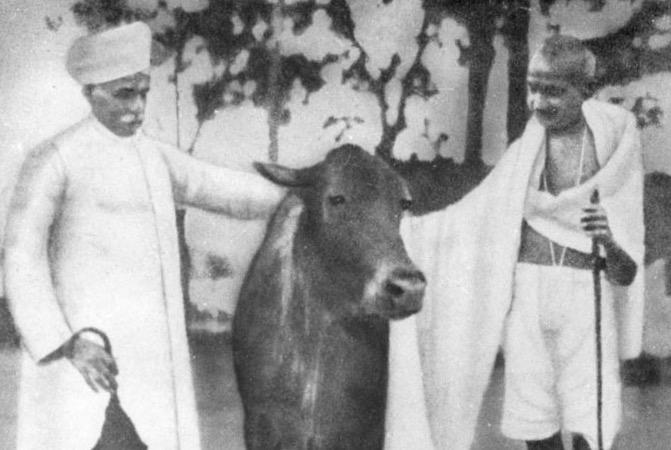 گائے کو مار دو، خود مر جاؤ، مسلمان کو مت مارو: گاندھی