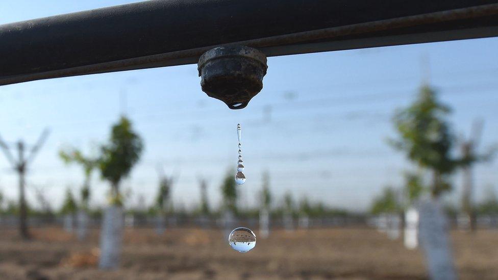 فصلوں کو پانی