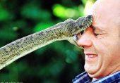 سانپ کاٹ لے تو منہ سے زہر نکالنا کیوں نقصان دہ ہے؟ کیا کریں، کیا ہرگز نہ کریں؛ مفصل رپورٹ