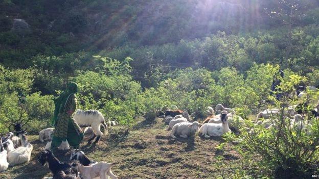 بھیڑ بکریاں