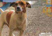 کتے کے سر کی قیمت 7 لاکھ روپے کیوں مقرر کی گئی