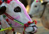 عید پر بیل قربان کرنے پر احمدیوں پر 298 سی کے تحت مقدمہ درج