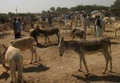 پاکستان دنیا میں گدھوں کی تعداد کے حوالے سے تیسرا بڑا ملک بن گیا