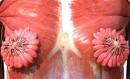عورت کے پستان میں دودھ کی نالیوں کا خاکہ انٹرنیٹ پر وائرل