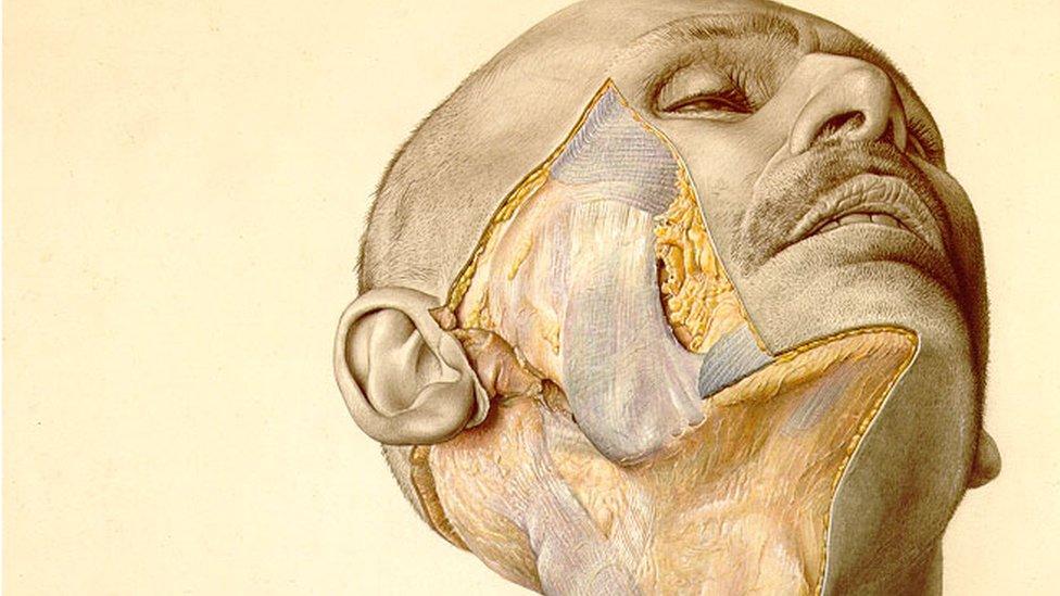 ایک انسان کے آدھے کٹے ہوئے چہرے کا سکیچ