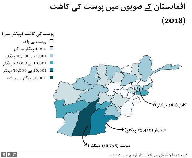 افغانستان میں پوست کی کاشت کا نقشہ