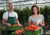 جنسی تسکین کے کھلونے سے ٹماٹر اُگانے کا تجربہ