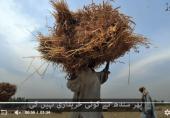 ملک میں آٹا بحران حکومتی کوتاہی ہے: شیخ رشید احمد