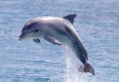 دیکھ بھال پر مامور شخص ڈولفن مچھلی کے ساتھ ایک برس تک جنسی زیادتی کرتا رہا