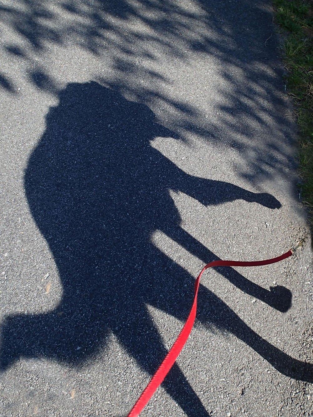 کتے کا سایہ