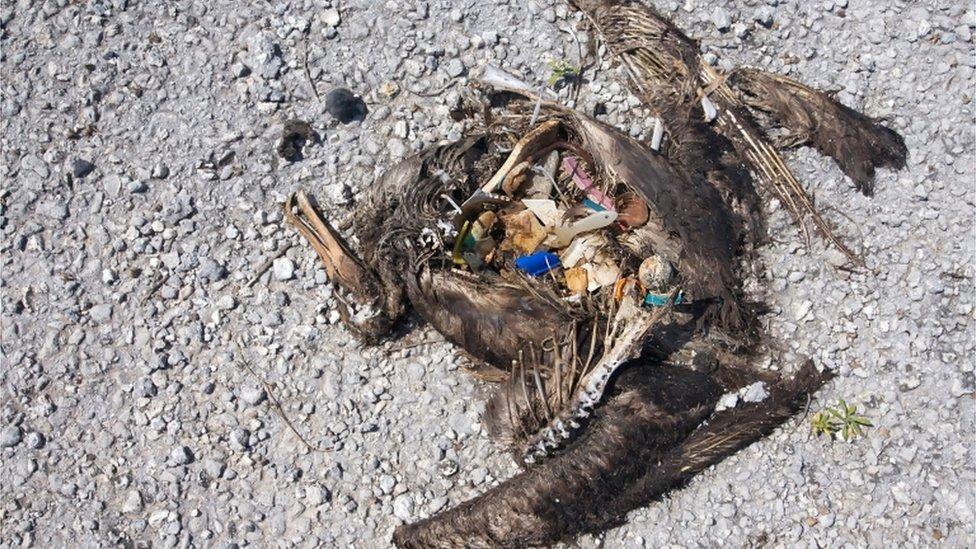 مردہ جانور