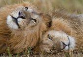 اسلام آباد کے مرغزار چڑیا گھر میں شیر، شیرنی سمیت متعدد جانوروں کی ہلاکتیں: اسلام آباد ہائی کورٹ کا ذمہ داران کے خلاف کارروائی کا عندیہ