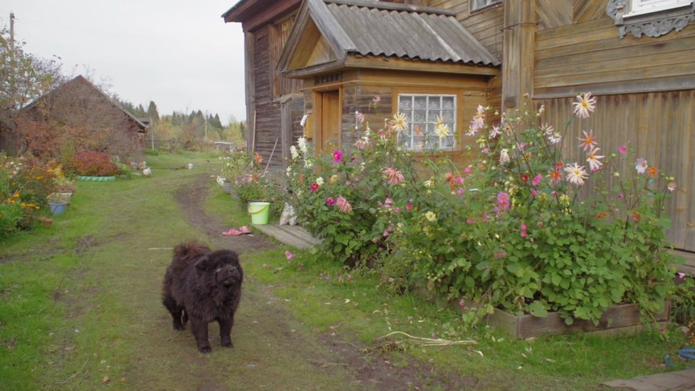 A dog outside a house in a rural Russian village