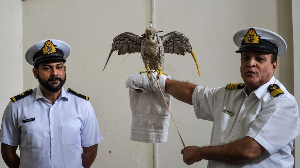 Pakistani officials holds a falcon