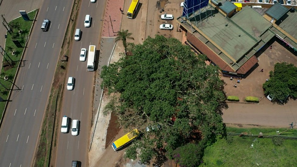 An aerial view of the fig tree, Nairobi, Kenya - October 2020