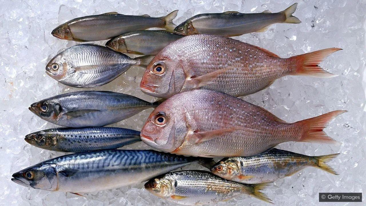 مچھلیاں