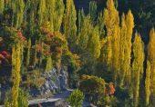 عمران خان کا بلین ٹری سونامی منصوبہ: سائنسدانوں کی نظر میں قدرتی جنگلات لگانے کے سنہری اصول