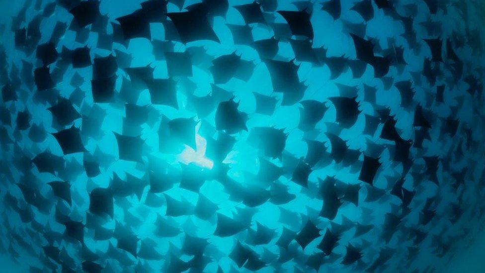 مچھلیوں کا ایک غول