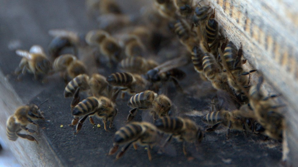 Bees from the training programme
