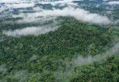 ڈائنوسارز کی ہلاکت کا سبب بننے والے سیارچے سے ہی ایمازون جنگلات وجود میں آئے