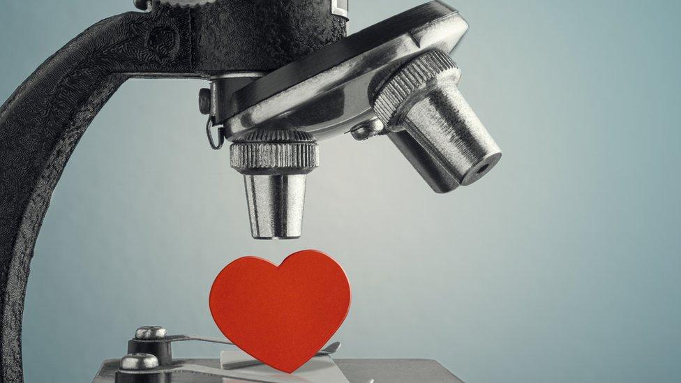 Heart under a microscope