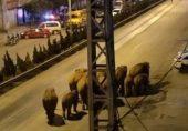 چین میں ہاتھیوں کے جھنڈ کے '500 کلومیٹر سفر' سے سائنسدان حیران