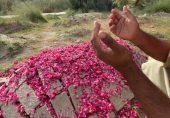 ایچ آئی وی: کیا سندھ کے شہر رتوڈیرو کے والدین اپنے متاثرہ بچوں کو زندہ رکھ پائیں گے؟