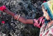 پاکستان میں گلابوں کی پیداوار کی صنعت: سُرخ گلابوں کا کھیتوں سے درگاہ تک کا سفر